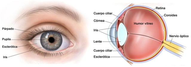 Coroides-Nervio óptico |