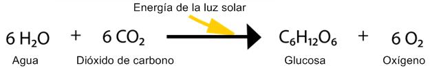 Esquema_de_reacción_química_de_la_fotosíntesis_en_vectores