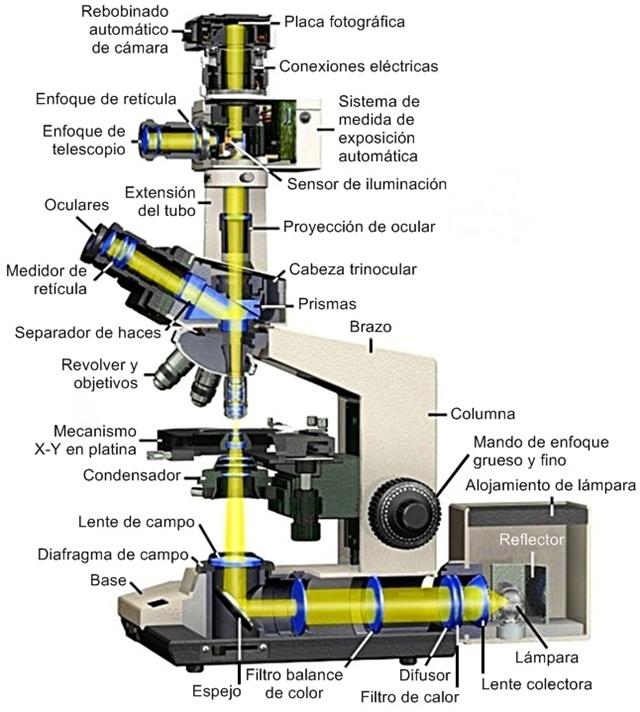Microscopio de investigación olympus BH2