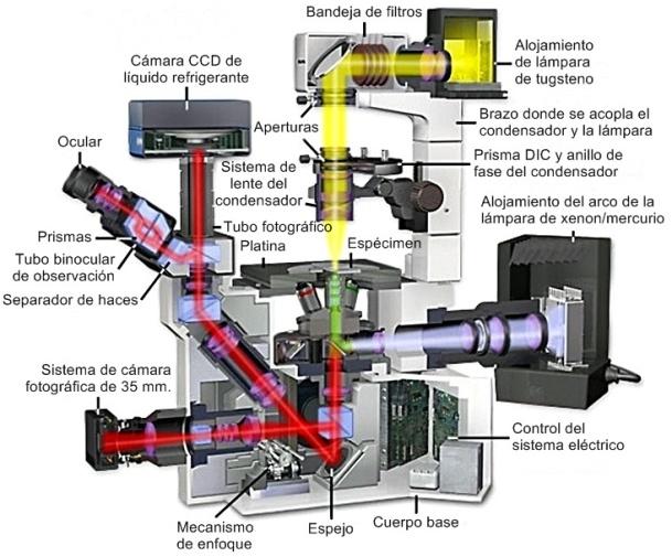 microscopio invertido para cultivo de tejidos, olympus IX70