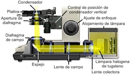 sistemas de iluminación en microscopio
