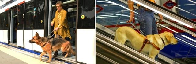asistencia-de-perro-guia