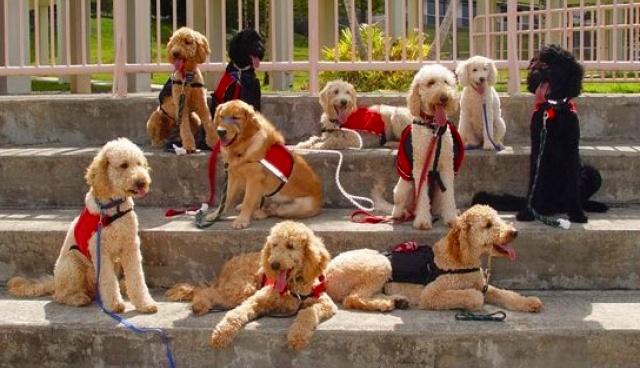 perritos-guia