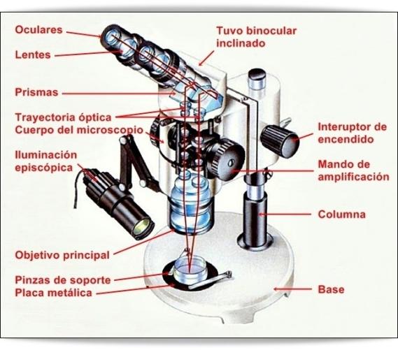 partes-del-microscopio