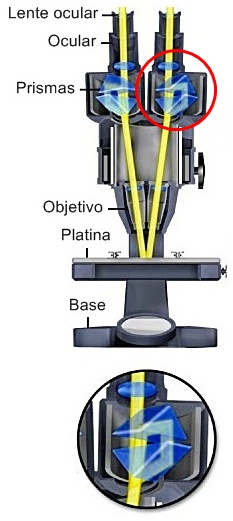 Prismas de microscopios