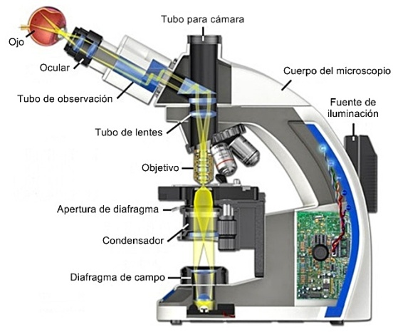 Recorrido óptico del microscopio