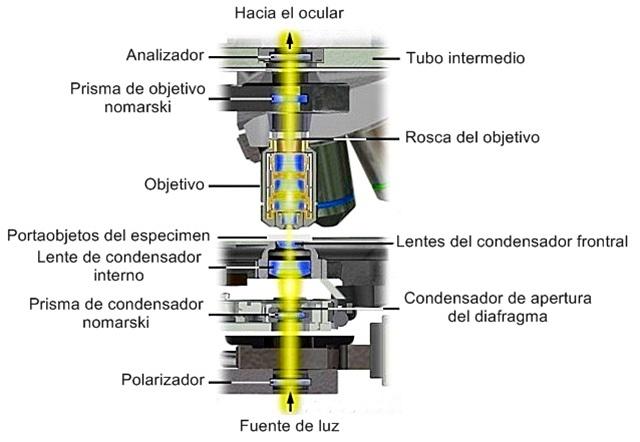 Alineamiento de un microscopio