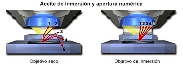 Aceite de inmersión y apertura numérica