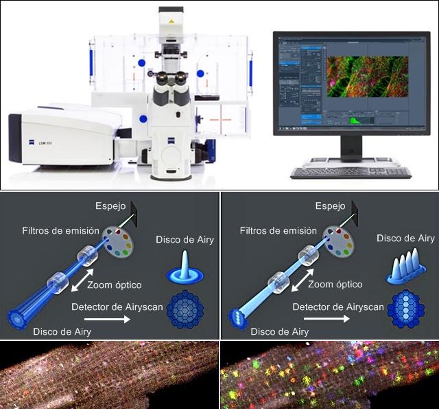 Microscopio zeiss LSM 880 con Airyscan