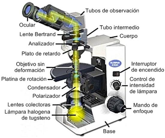 Microscopio binocular biológico cx 31 olympus