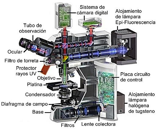 Microscopio Epi-fluorescencia