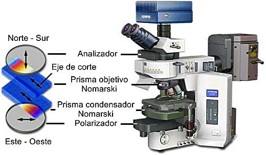 Microscopio Olympus BX61 motorizado de fluorescencia digital y DIC