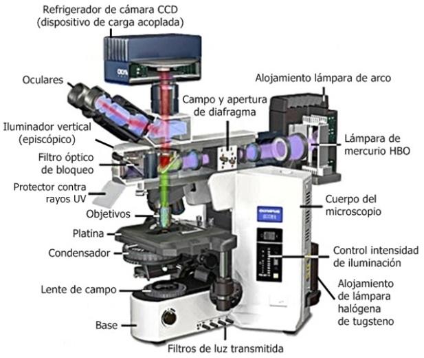 Microscopio_de_fluorescencia