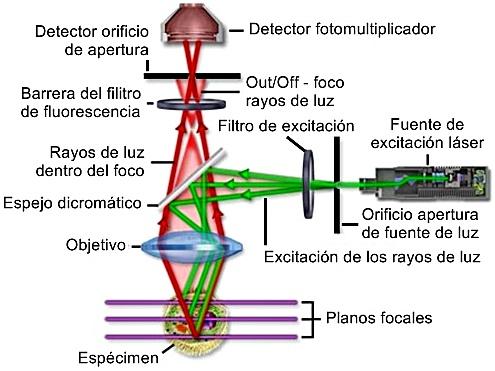 Configuración óptica y esquema de funcionamiento de láser de microscopio confocal