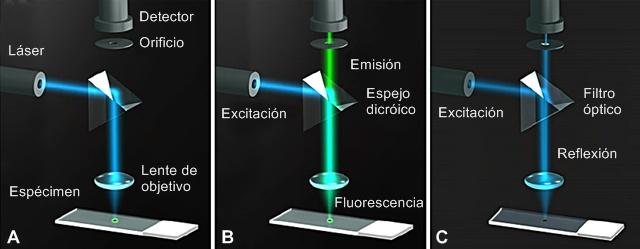Representación láser confocal