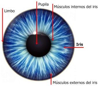 Iris_del_ojo